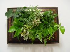 에코월 식물액자(101W)