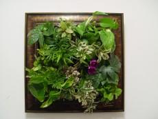에코월 식물액자(151W)