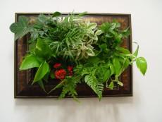 에코월 식물액자(201W)