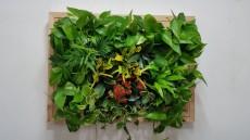 에코월 편백나무원목 식물액자(EP201W)